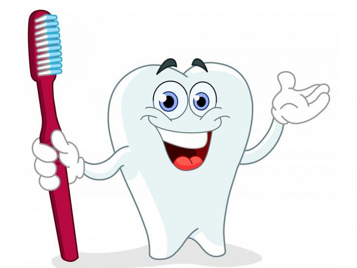 Hiểu Hơn Về Răng Và Mô Quanh Răng – Nha Khoa Xinh Xinh